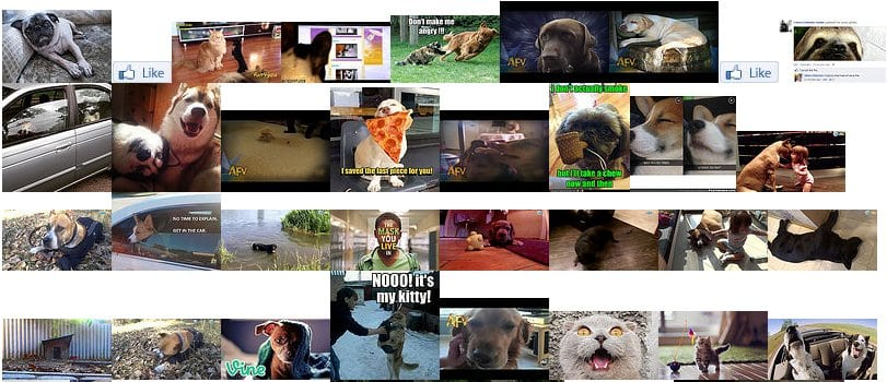 Flickr photo search result